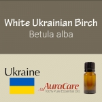 Birch, White Ukrainian - Betula lenta